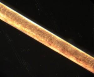 Zanimljivosti iz nauke Ljudska-kosa-300x247