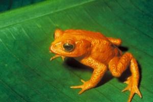 Zanimljivosti iz nauke PLANETA-Nestanak-biodiverziteta