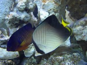 Zanimljivosti iz nauke PLANETA-Zakiseljenje-okeana5