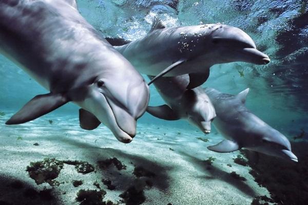 Neverovatna naučna otkrića u koja je teško poverovati Delfini